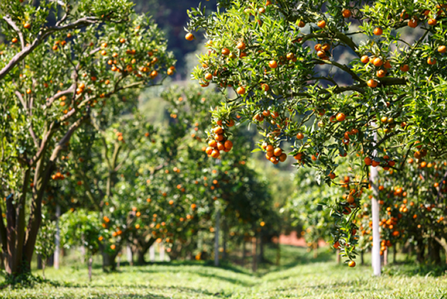 Fruit Trees That Grow Well In Calgary Fivestar Landscaping