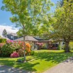 Are you Accidentally Killing your Trees? - Five Star Landscaping - Professional Landscapers Calgary