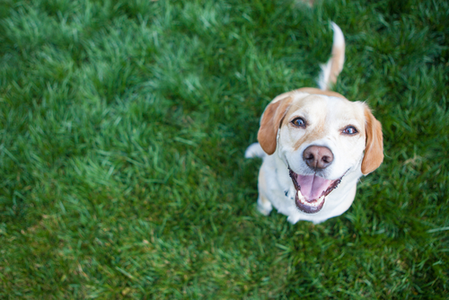 Keeping your Pets Safe and Lawn Healthy this Summer - Fivestar Landscaping - Landscaping Experts Calgary