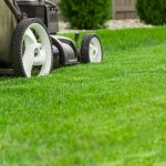 Common Calgary Lawn Problems - Five Star Landscaping - Calgary Lawn Experts