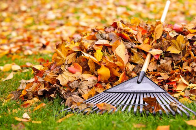 Three Things You Should Do Every Fall to Keep Your Lawn Beautiful - Five Star Landscaping - Landscaping Calgary