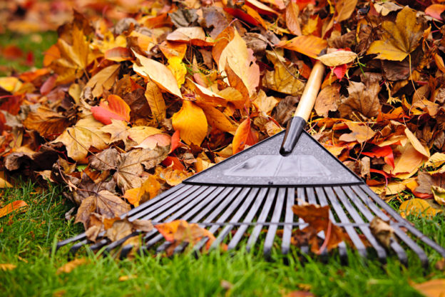 Are You Ready For Your Fall Clean Up Fivestar Landscaping