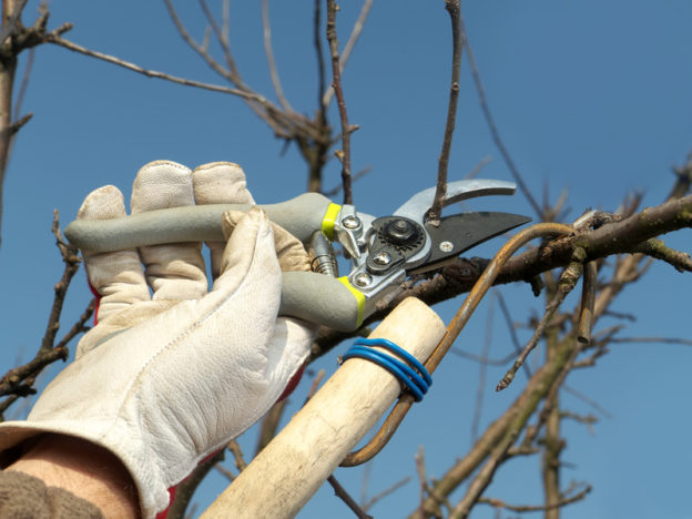 When to Prune Trees in Alberta - Five Star Landscaping - Landscaping Experts Calgary