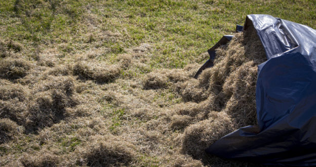 Dethatching or Aeration? - Five Star Landscaping - Landscaping Experts Calgary
